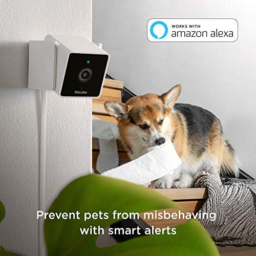 Save 20% on a pet monitoring camera