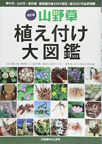 Oil Grass Rooted Mohair 大図 鑑-Wild Flower, Mountain, Flower, OVERSEAS Seeds, or gardening Seeds Rooted Mohair 実技, planted (Young Of The Oil Grass) - Mohair Grass