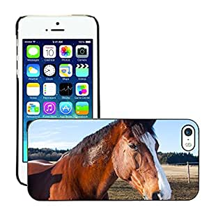 Super Stella Slim PC Hard Case Cover Skin Armor Shell Protection // M00146846 Horses Animals Domestic Solipeds // Apple iPhone 5 5S 5G