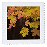 3dRose Danita Delimont - Botanical - USA, Utah, Zion National Park. Branch with yellow maple leaves - 16x16 inch quilt square (qs_260330_6)