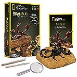 NATIONAL GEOGRAPHIC Real Bug Dig Kit - Dig up 3