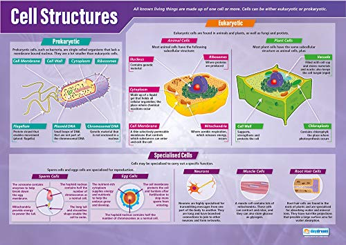 Cell Structures | Science Posters | Gloss Paper Measuring 33