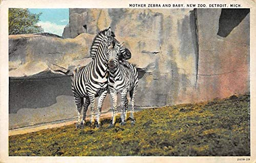 Zoos Mother Zebra And Baby New Zoo Detroit Michigan Usa Unused At Amazon S Entertainment Collectibles Store