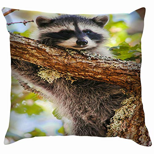 Young Raccoon Dripping Nose Oak Near Animals Wildlife Animal Funny Square Throw Pillow Cases Cushion Cover for Bedroom Living Room Decorative 16X16 Inch]()