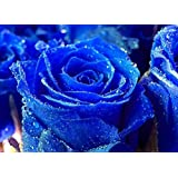 2016 Free shipping 200PCS Blue Rose Seeds Special Gift Easy to Plant Garden Planting Flower Seeds China Rare Semillas Rosa azul