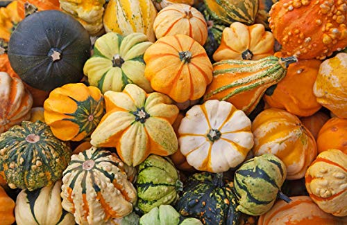 Pumpkin Ornamental Seeds Mix Giant Vegetable for Planting Decorative Unique Giant Organic Non GMO 10 Seeds