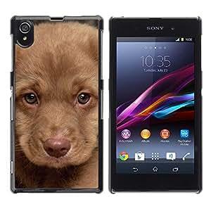PC/Aluminum Funda Carcasa protectora para Sony Xperia Z1 L39 C6902 C6903 C6906 C6916 C6943 Puppy Muzzle Portrait Light Brown Dog / JUSTGO PHONE PROTECTOR