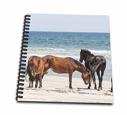 - 3dRose Wild Mustangs, Currituck Nwr, Corolla, Outer Banks, North Carolina Drawing Book, 12 x 12