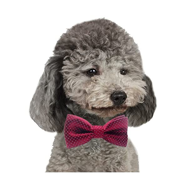YOY Handcrafted Adorable Pet Bow Ties – 6-Pack Adjustable Neck Tie 11.4″-18.5″ Polka Dots Bowties Dog Collar Neckties Kitty Puppy Grooming Accessories for Doggy Cat, 6 Colors Click on image for further info. 2