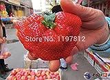 Giant Strawberry Seeds 100Pcs / BIG Red Strawberry / Organic Seeds Garden