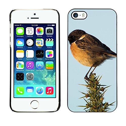 Premio Sottile Slim Cassa Custodia Case Cover Shell // F00031239 Oiseau chanteur // Apple iPhone 5 5S 5G