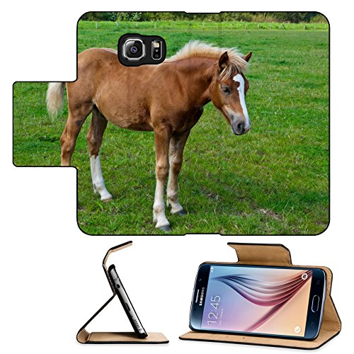 MSD Premium Flip Pu Leather Wallet Case Samsung Galaxy S6IMAGE ID 10627543 Brown foal with a white blaze posing in a Dutch meadow