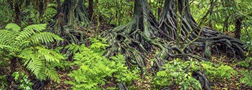 Terrarium Background (Reptile Habitat Background; Rain Forest Ferns & Roots for 20L, 3-sided Wraparound)