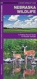 Nebraska Wildlife: A Folding Pocket Guide to Familiar Species (A Pocket Naturalist Guide)