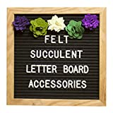 Felt Letter Board Accessories (Regular) - Letter Board Succulent Decorations Perfect for Baby Photo Props and Party Decor Works with All Changeable Message and Letterboards! (Accessory Kit Only!)