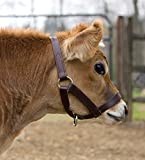 Perri's Mini Leather Cow Halter