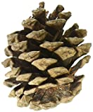 Winter Woods Natural Red Pinecones 7oz