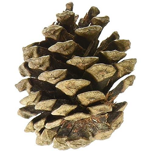 Decorative pine cones amazon natural red pine cones 7 ouncespkg solutioingenieria Images