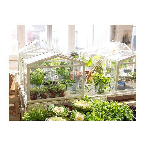 ミニガラス温室