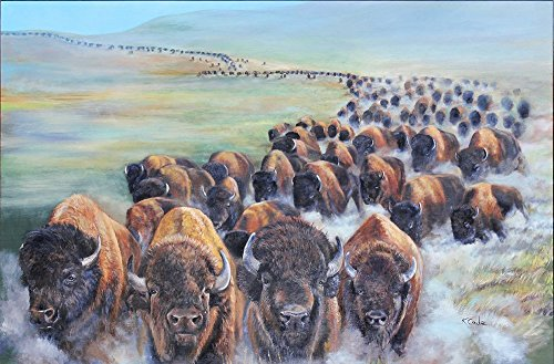 Buffalo Stampede - Limited Edition Print of running American Buffalo in South ()