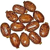 Giant Zanzibar Castor Bean 7 Seeds -Ricinus- Green Leaf Garden, Lawn, Supply, Maintenance