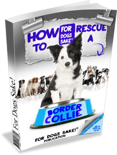 (The Truth Behind Rescue Border Collies (The Complete Guide to Border)