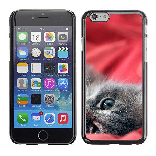 "Premio Sottile Slim Cassa Custodia Case Cover Shell // V00003545 minou paresseux // Apple iPhone 6 6S 6G 4.7"""