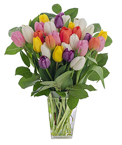 (Stargazer Barn Rainbow Bouquet, Stems Of Fresh Tulips With Clear Vase)