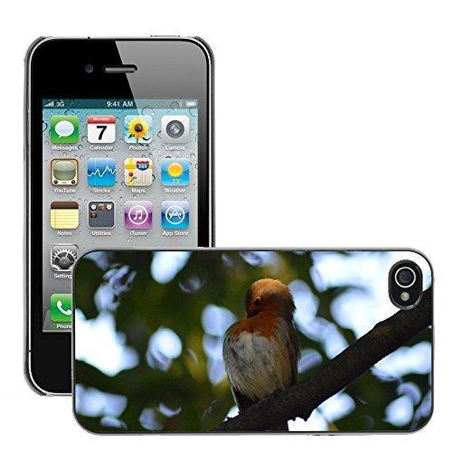 Bild Hart Handy Schwarz Schutz Case Cover Schale Etui // M00134231 Robin Red Robin Vogel // Apple iPhone 4 4S 4G