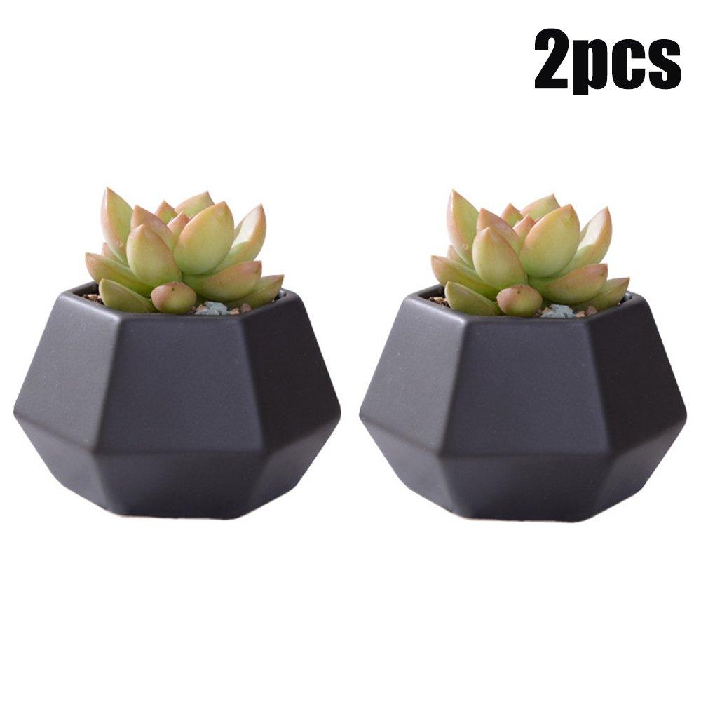 Easma Succulent Vase/Wall Plant Pot-Wall or Desk Decoration with Black Ceramic Vase,Cactus Pot, Pack of 2
