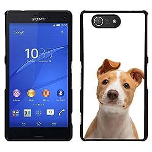 // PHONE CASE GIFT // Duro Estuche protector PC Cáscara Plástico Carcasa Funda Hard Protective Case for Sony Xperia Z3 Compact / American Pit Bull Terrier Canine Pet Dog /