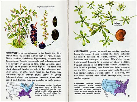 Wildflowers A Fully Illustrated Authoritative and EasytoUse Guide A Golden Guide from St Martins Press