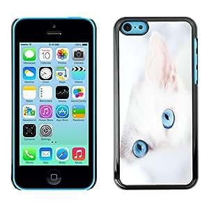 TECHCASE**Cubierta de la caja de protección la piel dura para el ** Apple iPhone 5C ** Cat White Kitten Blue Eyes Portrait Mongrel