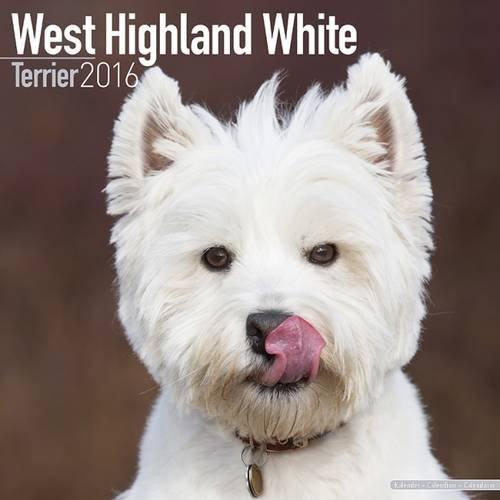 West Highland Terrier Calendar - Only Dog Breed West Highland Terrier Calendar - 2016 Wall calendars - Dog Calendars - Monthly Wall Calendar by Avonside