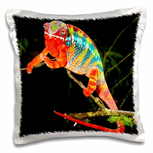 (3dRose Rainbow Panther Chameleon, Lizard in Madagascar-Na02 Dno0829-David Northcott-Pillow Case, 16 by 16