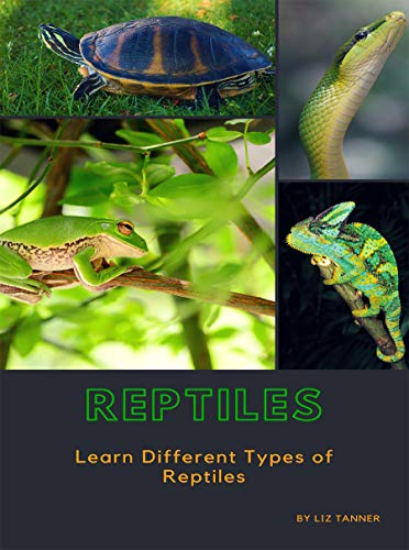 REPTILES: Learn Different Types of Reptiles