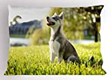 Ambesonne Alaskan Malamute Pillow Sham, Klee Kai Puppy Sitting on Grass Looking up Friendly Young Cute Animal, Decorative Standard King Size Printed Pillowcase, 36 X 20 inches, Multicolor