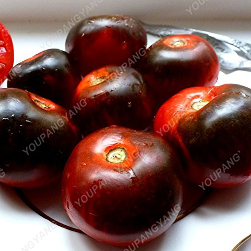 100 Giant Tomato Seeds Big Beef Hybrid Tomato Seeds in Bonsai NO-GMO Vegetable Seeds for Home Garden Planting Burgundy