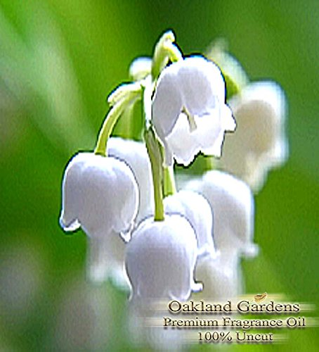 Lilly of the Valley Fragrance Oil - The delicate, white-green lily of the valley with heart notes of rose, jasmine and lilac - By Oakland ()