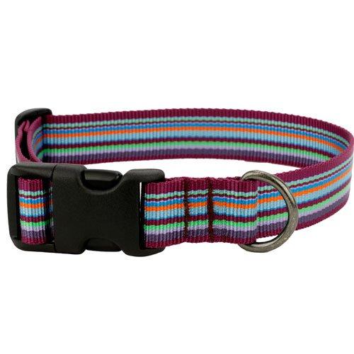Ollydog Dog Pack - OllyDog Small Downtown Collar, Violet