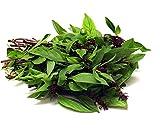 Seedline Thai Sweet Basil Seeds (1,000 seeds) - Herb Heirloom Vegetable