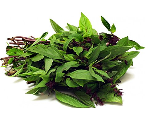 Seedline Thai Sweet Basil Seeds (1,000 seeds) - Herb Heirloom Vegetable