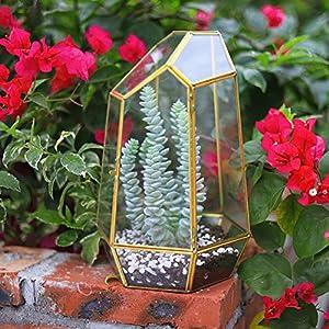 The Fellie 98 Diy Glass Terrarium Container Plant Terrariums For Succulent Cacti Fern Flower Gold