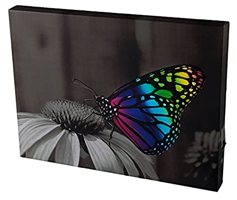 Light Up Canvas Wall Art by Clever Creations   Beautiful Rainbow Butterfly on Flower Wall Art with LEDs   11.75