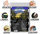 Pine Needle Tea Organic Wild Harvested - Raw Vegan Non-GMO Zero Sugar No Added Salt Preservative Free - 20 Bag Pack by KIKNBAC Assets
