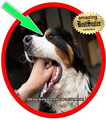 how to stop your dog from play biting