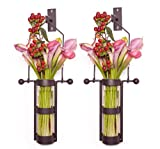Danya B. Wall Mount Hanging Glass Cylinder Vase Set with Metal Cradle and Hook Review
