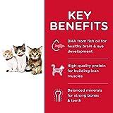 Hill's Science Diet Dry Cat Food, Kitten, Chicken