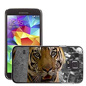 Cas Coq Case Cover // M00147283 Tiger Cat Zoo Predator Animales // Samsung Galaxy S5 S V SV i9600 (Not Fits S5 ACTIVE)