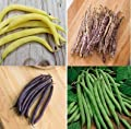 David's Garden Seeds Bean Bush Seed Collection SLSC555 (Multi) 4 Varieties 400 Seeds (Open Pollinated, Heirloom, Organic)